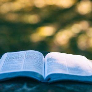 blur-book-bokeh-1868068.jpg